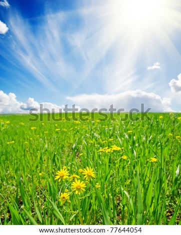 spring meadow with flowers. soft focus on flower - stock photo