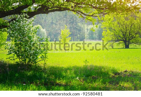 Spring meadow with fresh green grass and blooming trees - stock photo