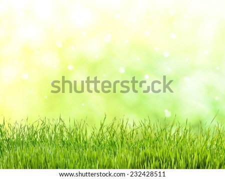 Spring meadow with lovely flower