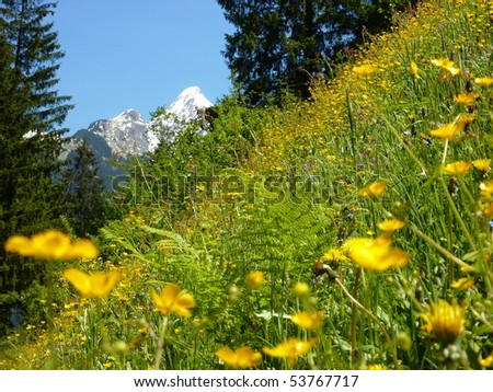 Spring meadow with snowy mountains in the background - stock photo