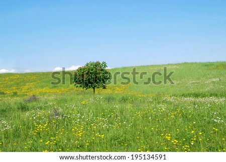 Spring meadow with trees in bloom - stock photo
