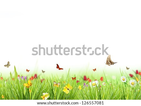 Spring meadow with white background - stock photo