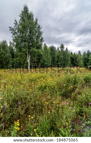 Spring meadow with wild flowers near forest