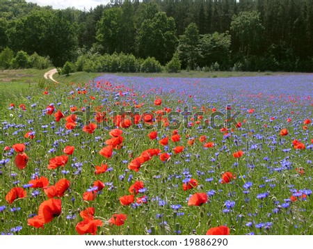 spring meadow with wildflowers - stock photo