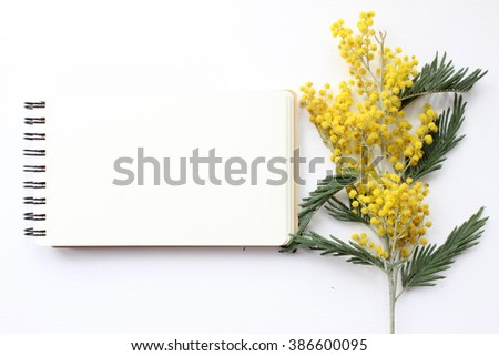 Spring Mimosa Mockup. Post blog social media 8 march. Top view with blank space. Stylish trendy photography. - stock photo