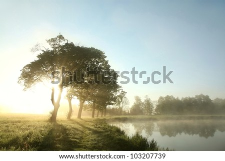 Spring morning on the edge of the lake. - stock photo