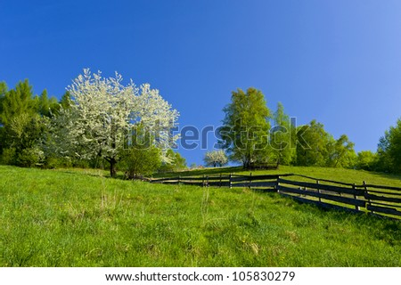 spring mountain landscape with blooming trees - stock photo