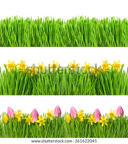 Spring narcissus and tulip flowers. Green grass with water drops. Nature objects isolated on white background. Floral banner - stock photo