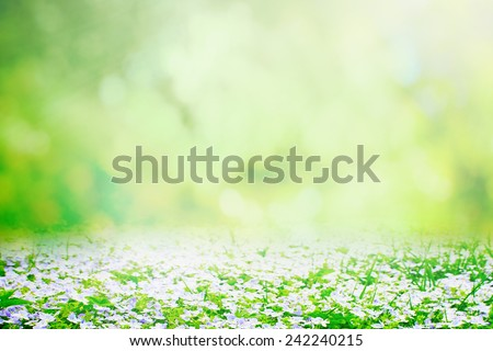 Spring natural background - stock photo