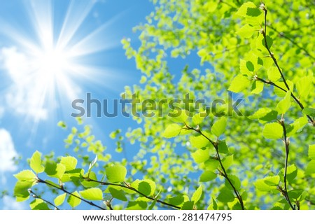Spring natural background with young birch leaves - stock photo