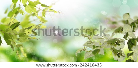 Spring nature - stock photo