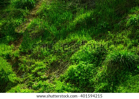 Spring nature - stock photo
