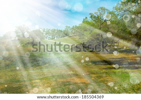 Spring nature background with sunshine / green landscape with sun beams/ Sunny forest early in the morning - stock photo