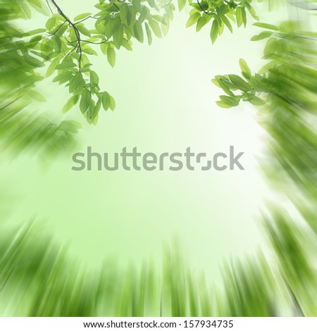 spring nature green leaf abstract background