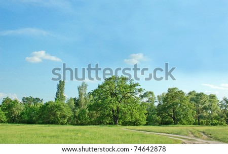 Spring oak tree in green meadow and blue sky