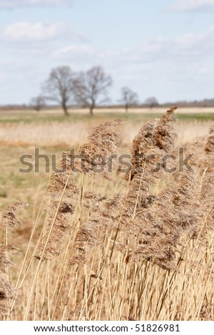 Spring oak trees in the field - stock photo