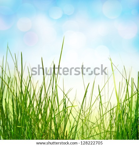 Spring or summer abstract nature background with grass - stock photo
