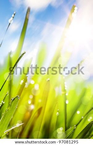 Spring or summer abstract nature background with grass and blue sky - stock photo
