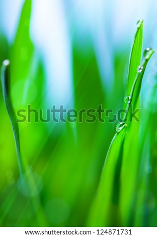 Spring or summer abstract nature background with grass in the blue sky in the back - stock photo