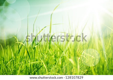 Spring or summer abstract nature background with grass in the meadow and blue sky in the back. Defocus - stock photo