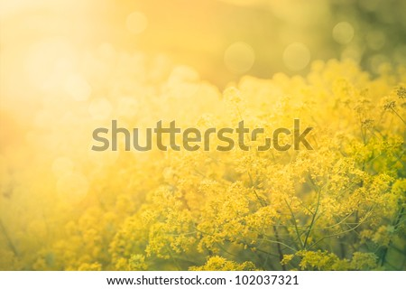 Spring or summer floral abstract background. Flower design with copyspace and bokeh - stock photo