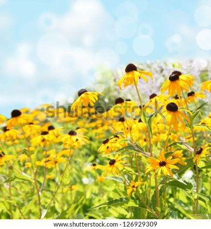 Spring or summer nature background. Selective focus - stock photo