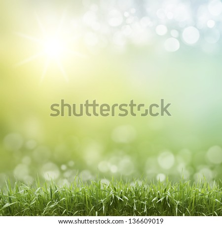 Spring or summer season abstract nature background with grass and blue sky in the back