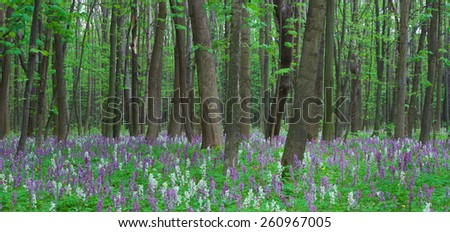Spring panorama. Flowers in the forest. Beauty in nature - stock photo