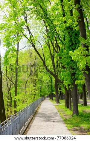 Spring park alley with  Chestnut trees - stock photo