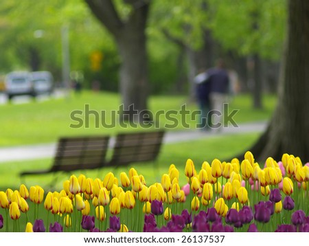 Spring park, tulips in foreground, a couple walking in background - stock photo
