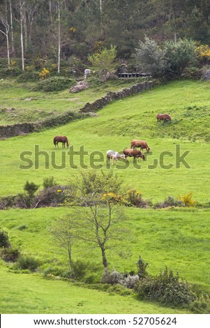 spring pasture, with cows and horses. In the background traditional beehives