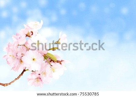 Spring pink blossoms with blur sky background - stock photo