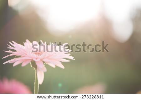 Spring pink flower  - stock photo