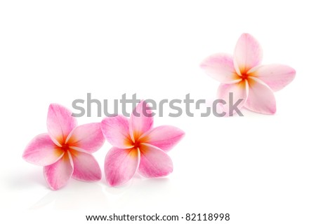 Spring pink flower isolated on white background - stock photo