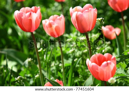 Spring pink flowers on green grass background