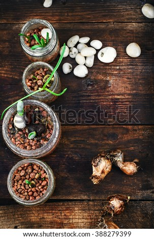 spring plant seedlings in wooden box grown planting - stock photo