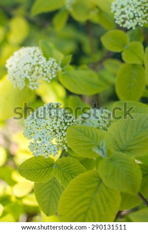 Spring plants with white blossoms - stock photo