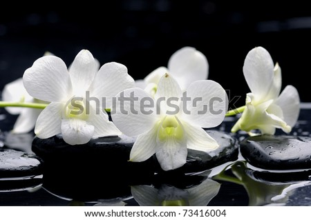 Spring plum flowers on wet stone - stock photo