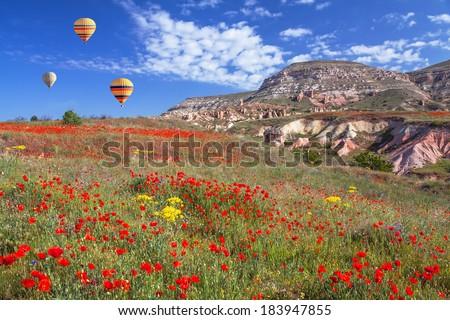 Spring poppy field with hot air balloons. Cappadocia, Turkey.  Canon 5D Mk II. - stock photo