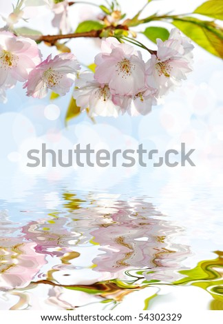 spring sakura and mirroring - stock photo