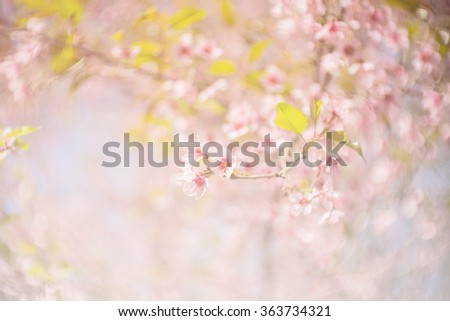 spring sakura pink flower color toned abstract nature background / Spring flowers/Spring Background - stock photo