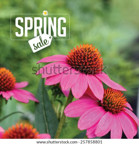 Spring sale Background royalty free stock photo for greeting card, ad, promotion, poster, flier, blog, article, social media, marketing, florist, garden center, gardening, nursery - stock photo