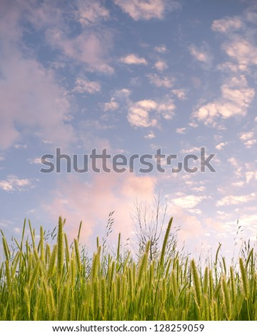 Spring scene. - stock photo