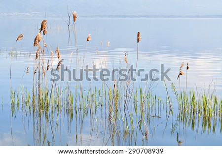 Spring scene of blue lake and green reed in vibrant colors - stock photo