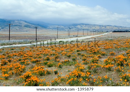 Spring scene with poppy flower, road and cloudy sky. - stock photo
