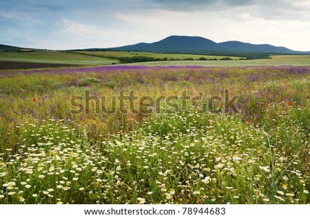 Spring scenery with wild flowers of the field blossoms and mountain, nature landscape