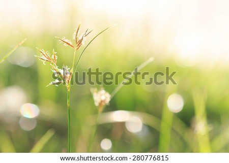 spring season green blur soft focus nature background - stock photo
