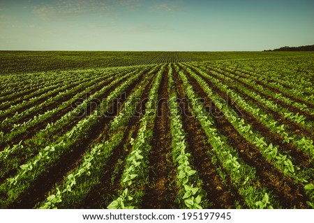 spring shoots in the fields - stock photo