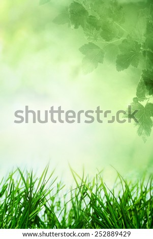 Spring sky with sunny field and tree branch and grass - stock photo
