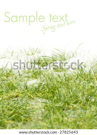 Spring, Snow melting - stock photo